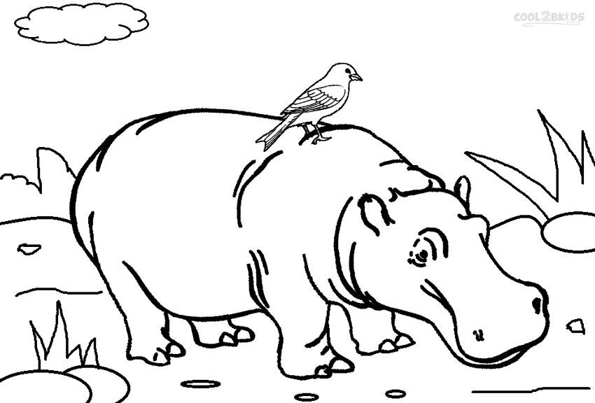 Bulky Mammals 30 Hippopotamus Coloring Pages Hippo Cliparts