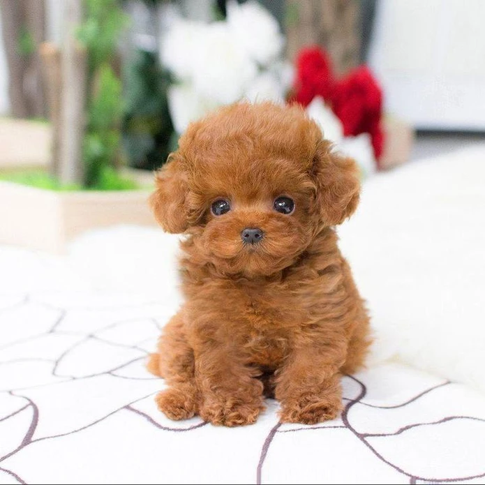 Realistic Teddy Dog Lucky - Light Brown