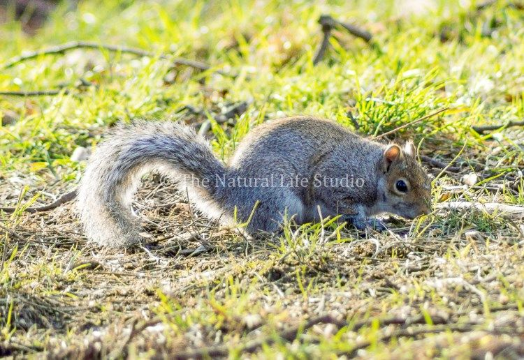 A lovely shot of a squirrel in Woodthorpe Park, Nottingham.