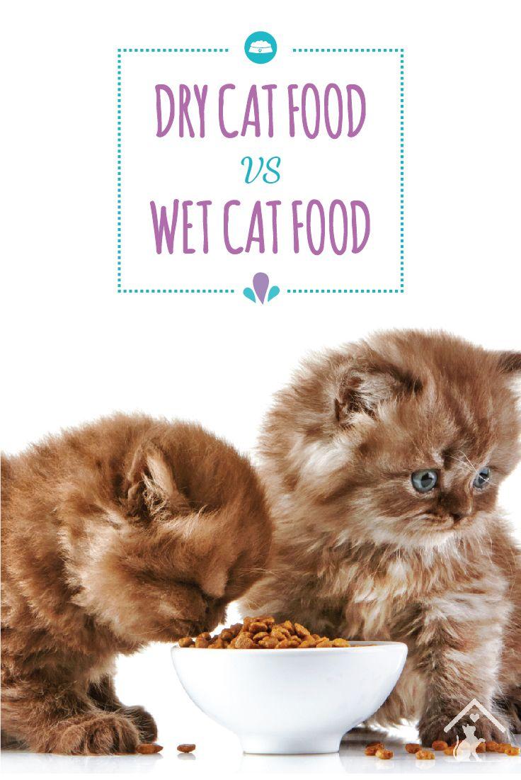 Dry Cat Food vs Wet Cat Food Dry cat food, Cat food, Cats