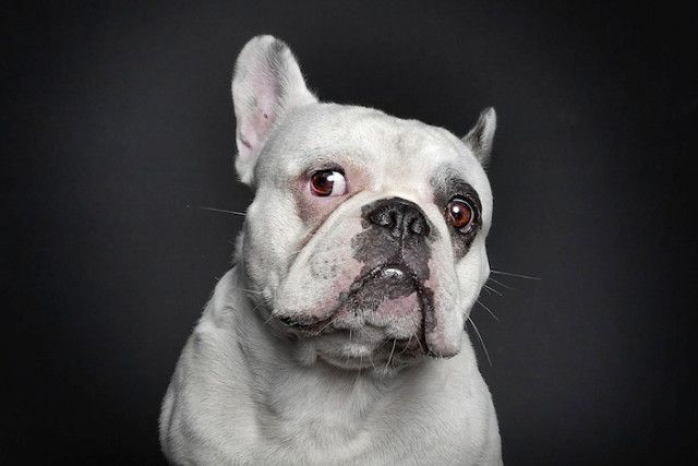 Portraits Of Dogs With Human Expressions