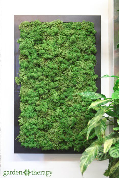 This gorgeous moss art doesn't need a drop or water or maintenace - and it's real! from the ByNature Studio Tour