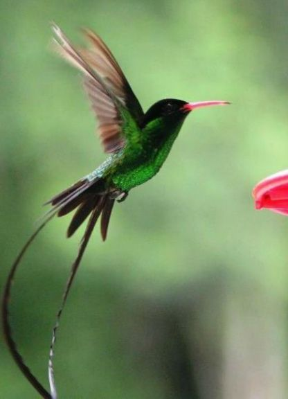 Bird Jamaican Tattoos Beautiful Birds
