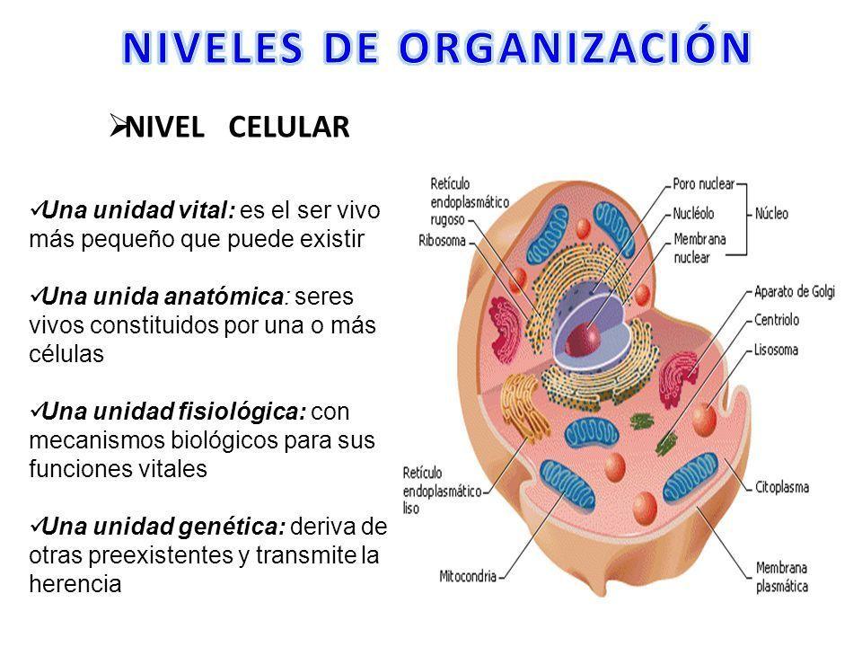 Buenos Trabajos Celula Animal Y Vejetal Dibujos De Celulas Celulas Celula Animal
