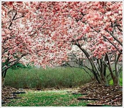 10 Most Beautiful Indian Roads Blossom Trees Cherry Blossom Wallpaper Flowering Trees