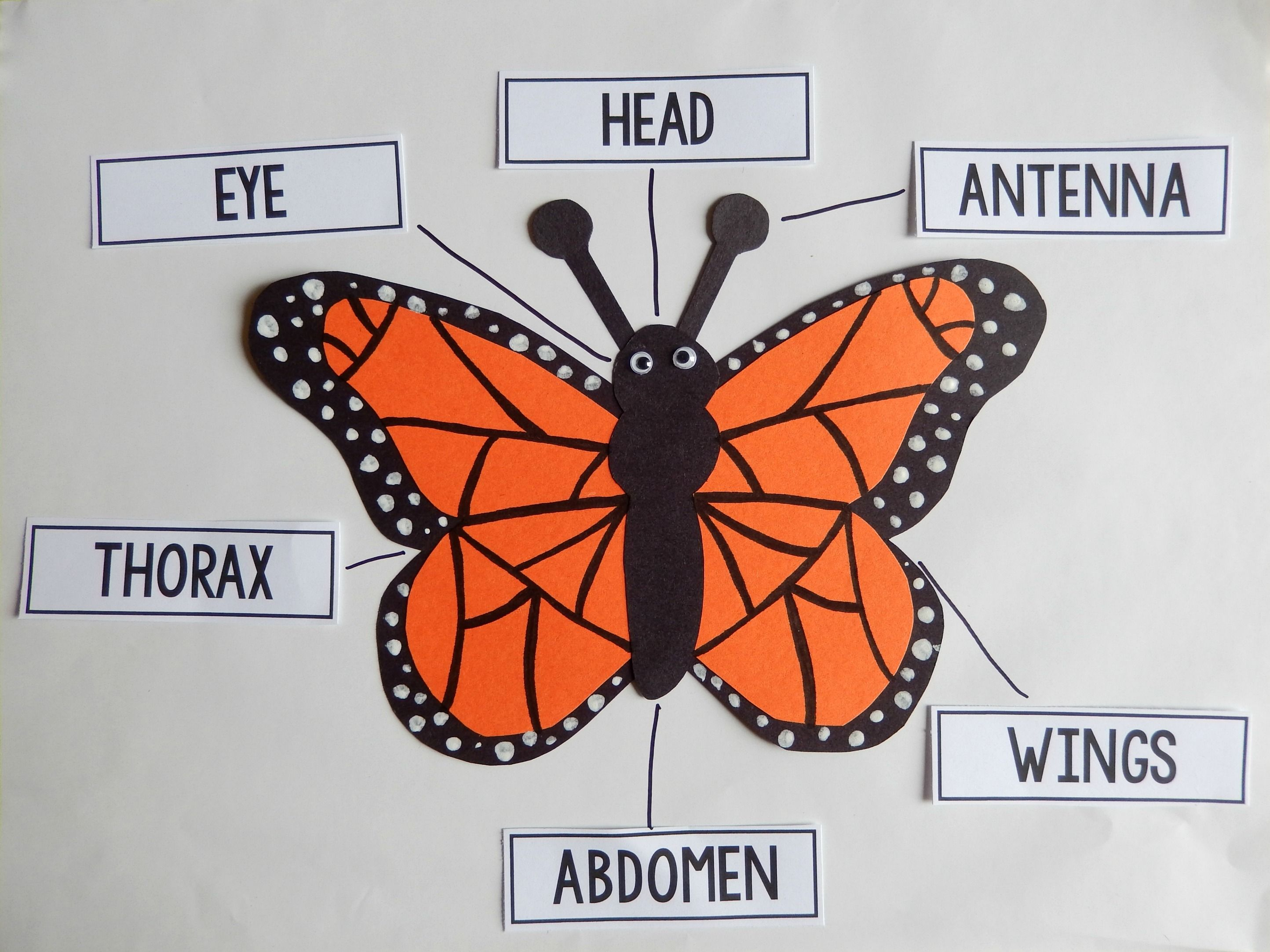 Love This Butterfly Craftivity With Labeling Activity For