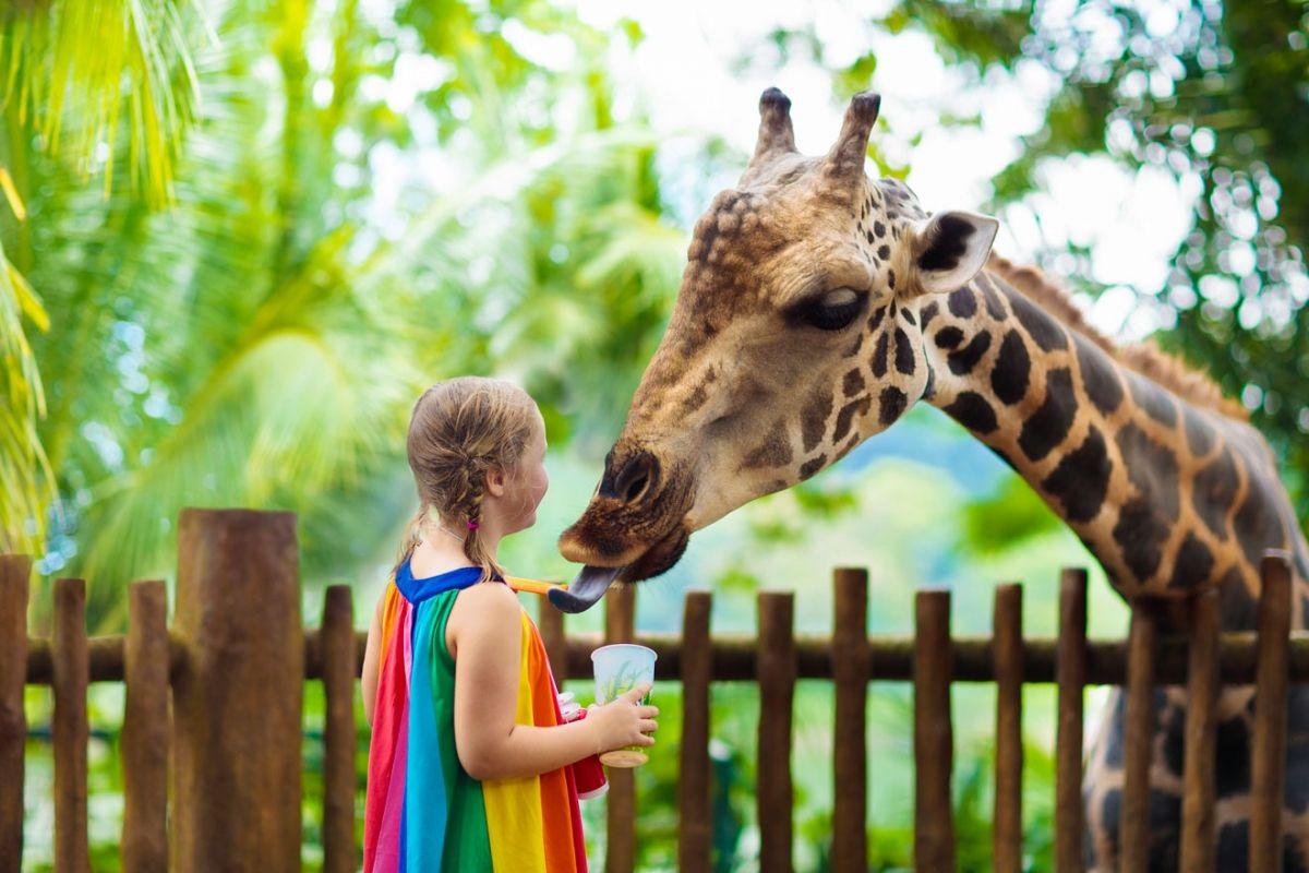 15 Best Things To Do In Singapore Singapore Zoo Safari Park Feeding Kids