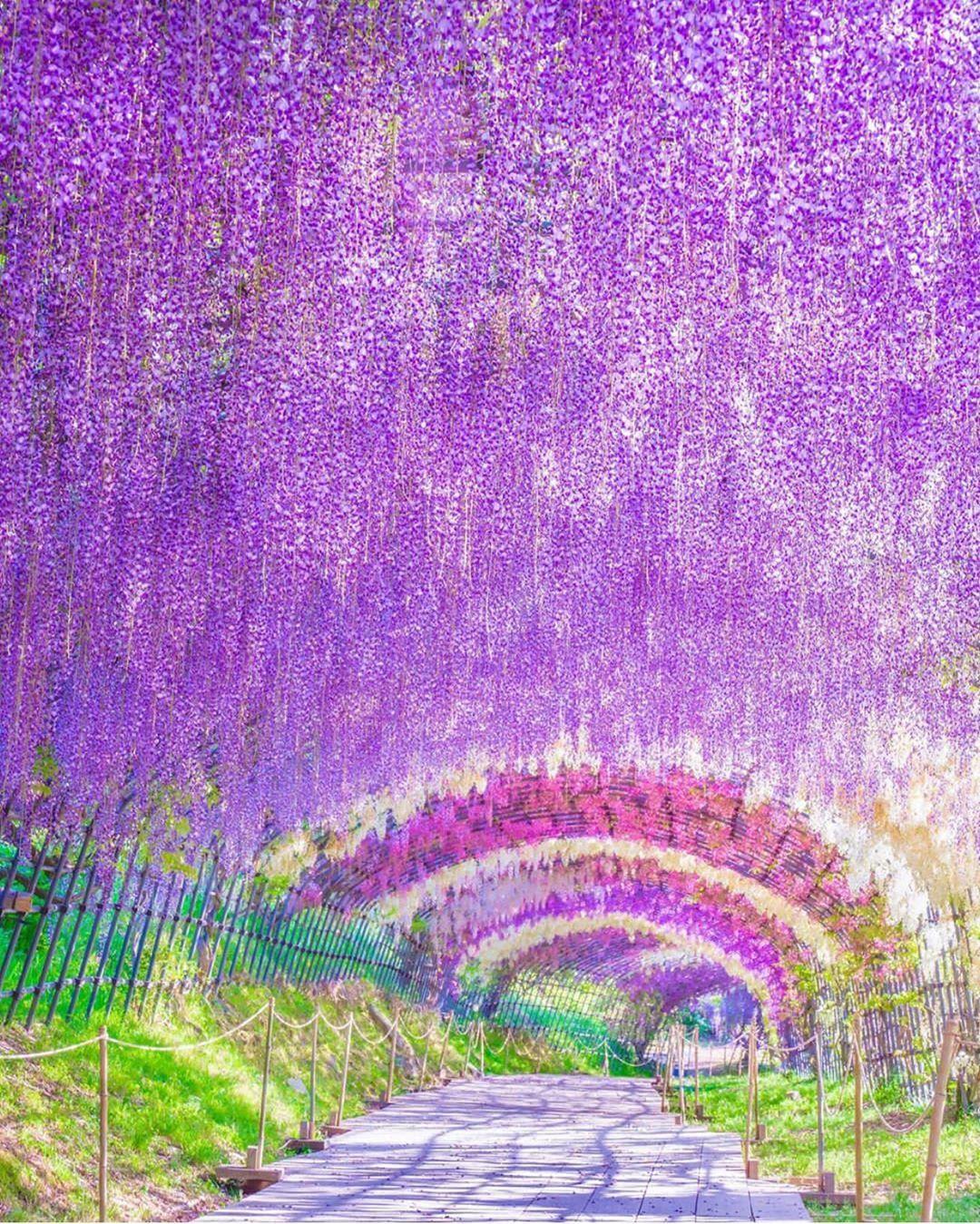 Wonderful Places On Instagram Ashikaga Flower Park Japan Picture By Traveler Sui Wonderf Ashikaga Best Places To Travel Cool Places To Visit