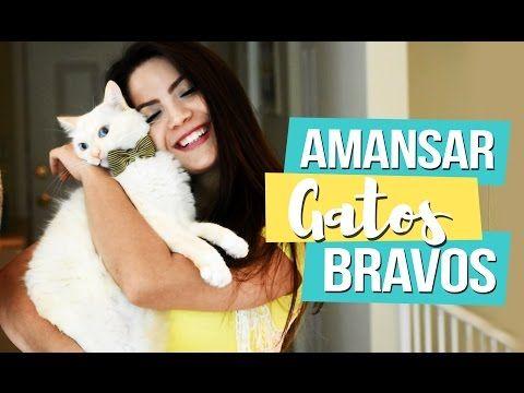 CUIDANDO DE UM GATO APÓS A CASTRAÇÃO - Aloka por Gatos #23 - YouTube