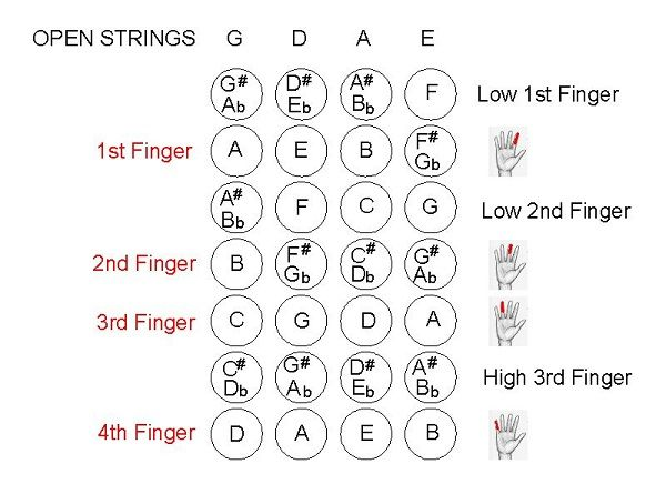 First Position Finger Chart  ViolininformationWebsCom  Learn