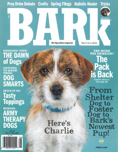 Pin By Cheyenne Pummill On Banner Animal Magazines Pet Magazine Dog Magazine