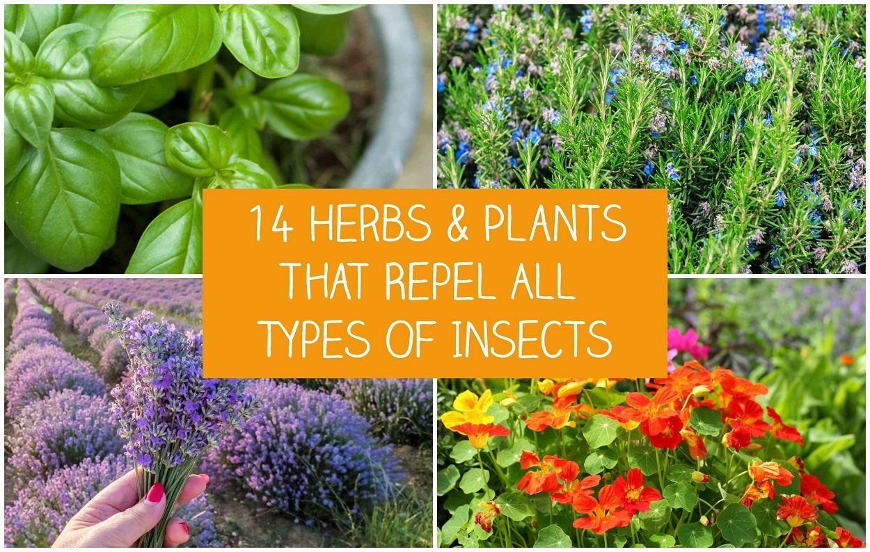 Now That Summer Is In Full Swing You May Find Yourself Wanting To Enjoy Your Outdoor Spaces Perhaps You In 2020 Planting Herbs Insect Repellent Plants Garden Insects