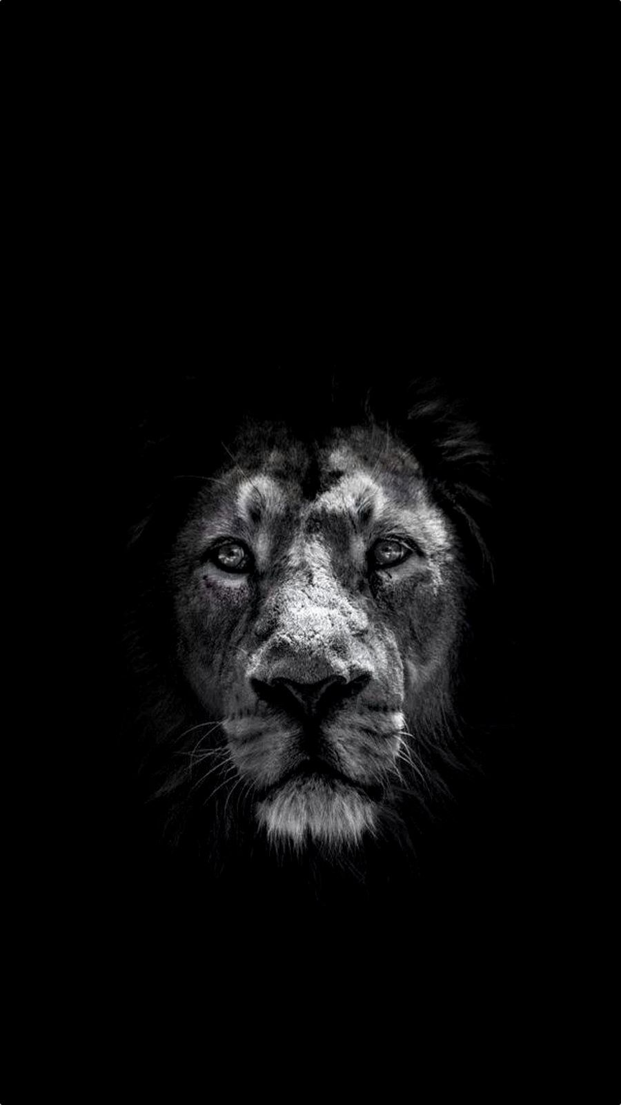 Iphone 6 Plus Lion Black Wallpaper Wallpaper In 2019 Pinterest