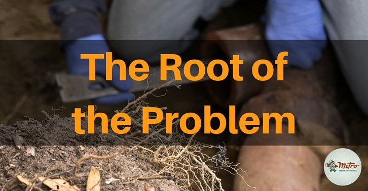 Defend Your Sewer Line Against Roots Roots Tree Roots Line