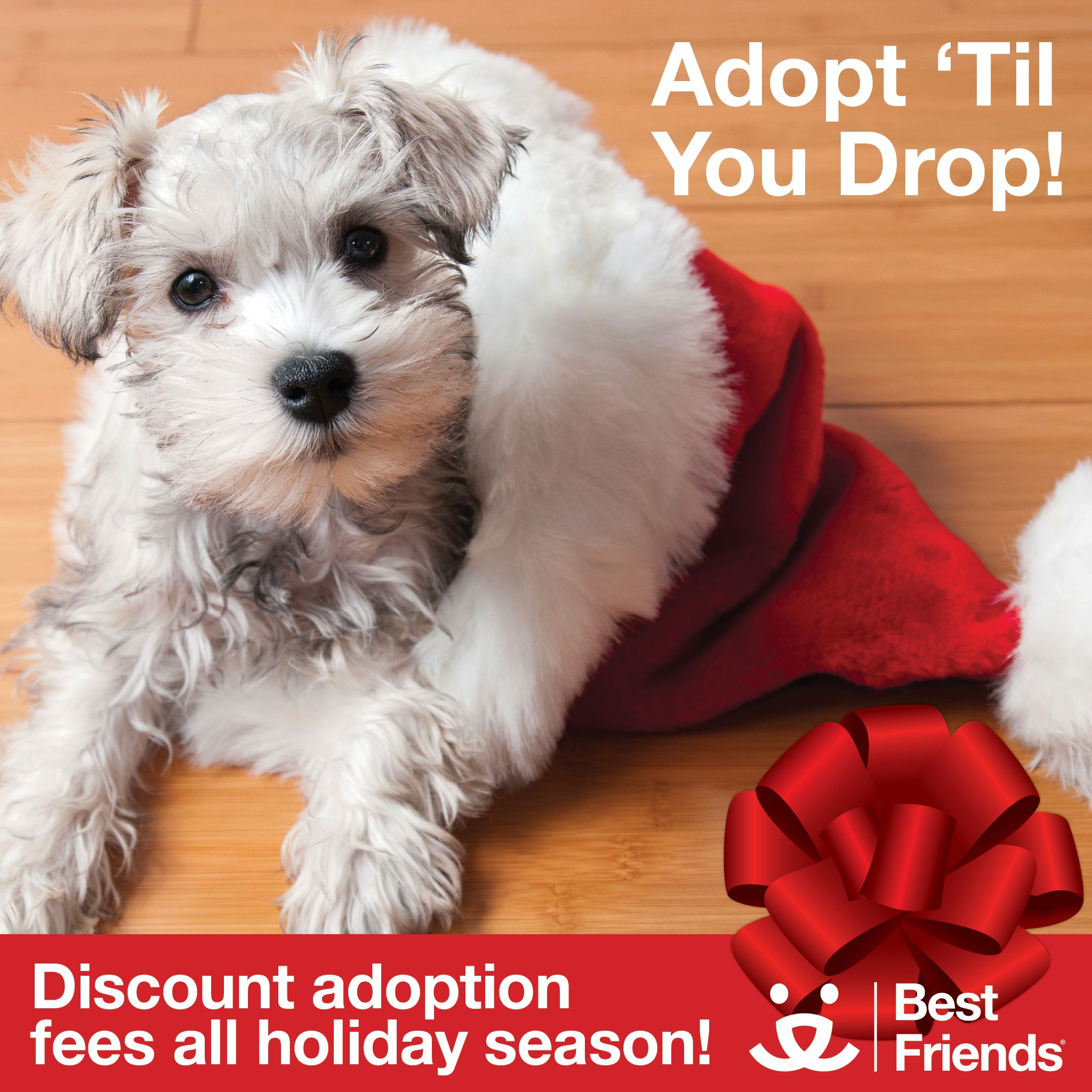 Adopt Near You Pets Adoption Dog Growling