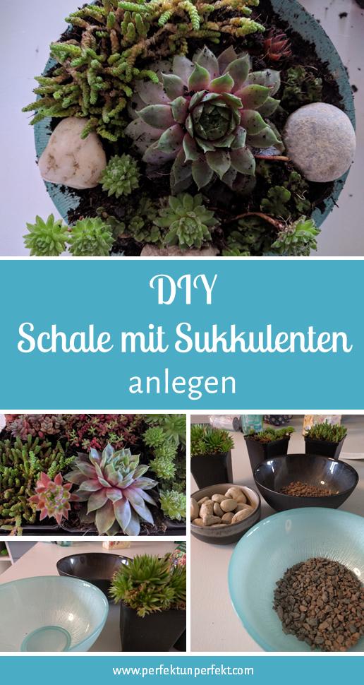 DIY – eine Schale mit Sukkulenten anlegen | Perfekt Unperfekt, , Pflanzen, Dekoration, Zimmer, Tischdecke, Deko #pflegeleichtepflanzen