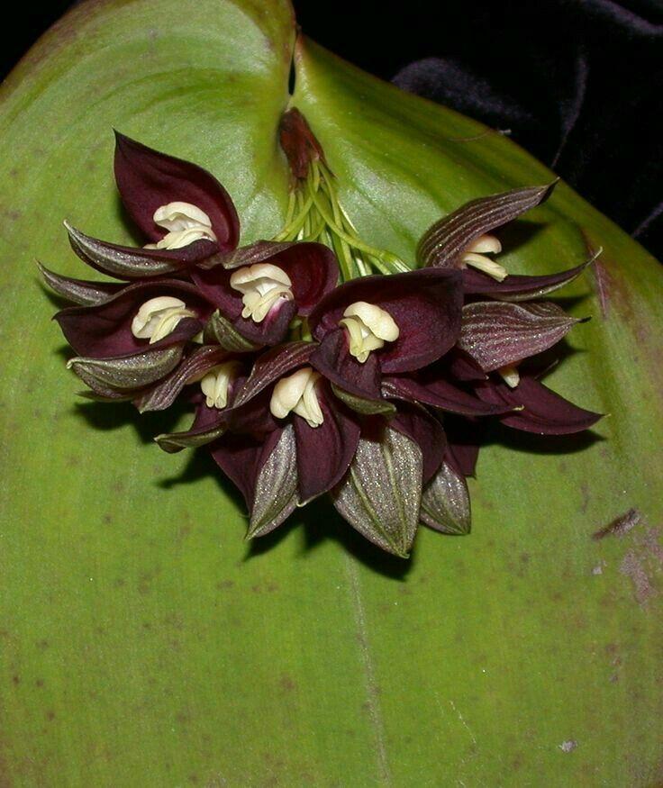 Pin de Elisandra G.Drebes em Minhas orquídeas virtuais e ...