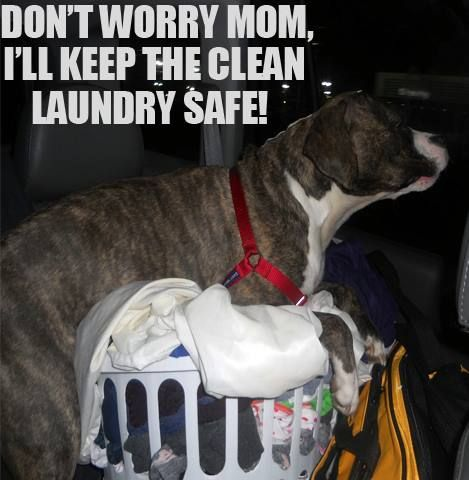 pittie houses statistically have safer laundry than any other house.