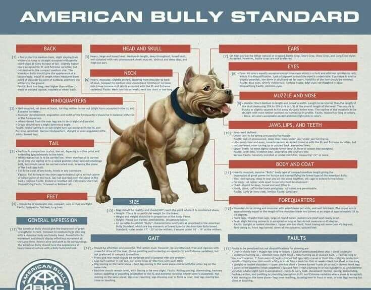 Pin De Samuel Gonzalez En American Bully Micro Pocket