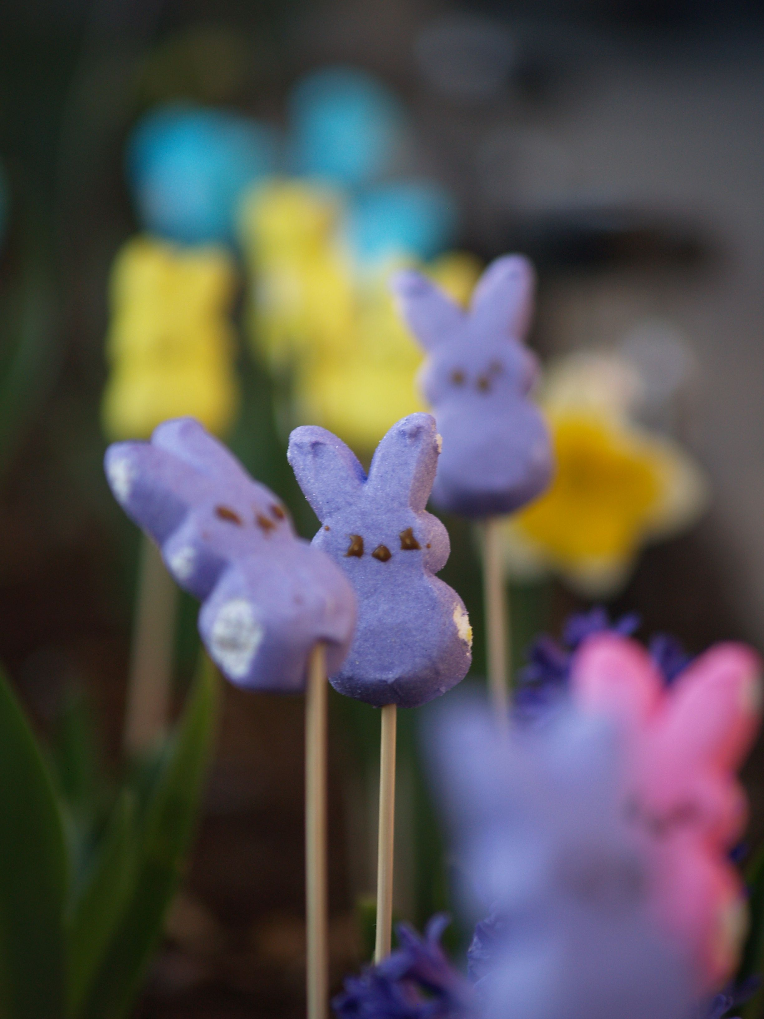 Peep Garden    My dad set up different colored peeps on BBQ stakes on the pathway to our house for my daughter. He matched the peeps' colors with the flowers. Very cute and Hannah loved it!