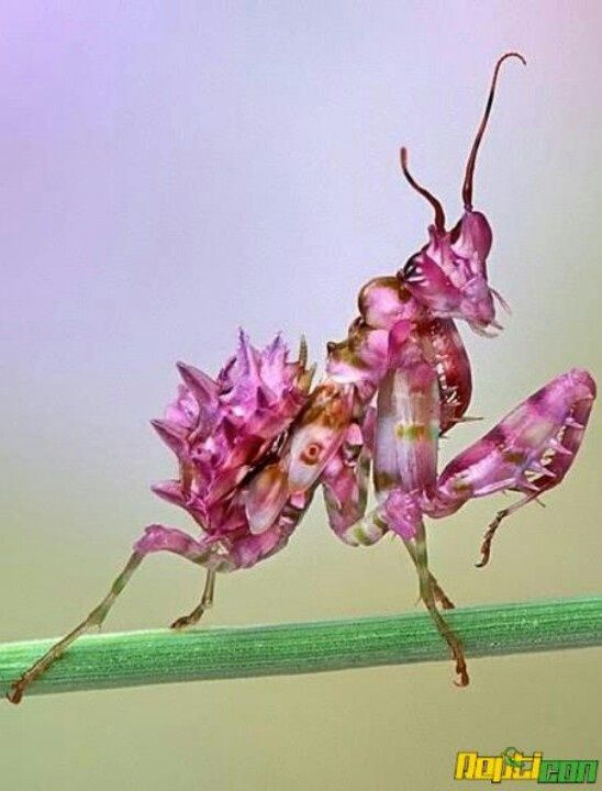 3d Realistic Floral Tattoos Beautiful Bugs Orchid Mantis Orchids