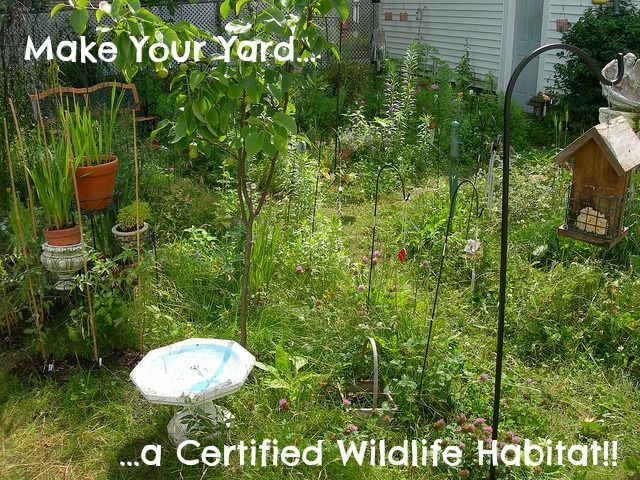 "Certified Backyard Habitat make your yard and garden a ""certified wildlife habitat"" with the"