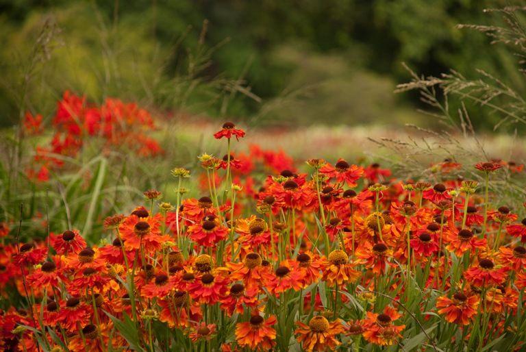 Late summer flowering perennials euffslemani late summer flowering perennials images flower decoration ideas mightylinksfo