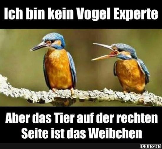 Ich Bin Kein Vogel Experte, Aber.. | Lustige Bilder, Sprüche, Witze