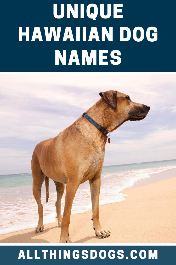 Pin on Large Dog Breeds
