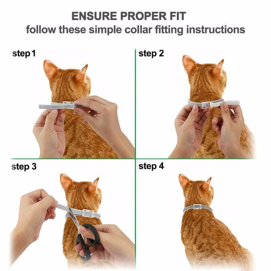Hartz Ultraguard Plus Flea And Tick Cat Collar Remarkable Product Available Now This Is An Affiliate Link And I Receive A C Cat Fleas Cat Collars Cats Kittens
