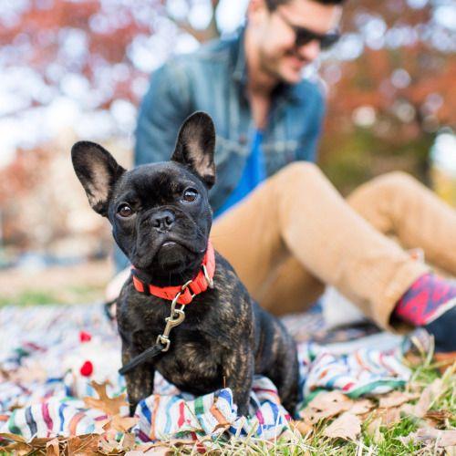 Stella French Bulldog 4 M O Mccarren Park Brooklyn Ny