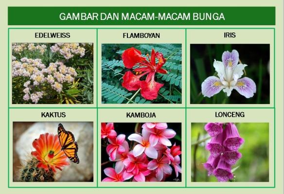 Gambar Bunga Lengkap Beserta Penjelasannya Struktur Bunga Fungsi Serta Ulasan Lengkapnya Infoku 5 Contoh Bunga Sempurna Bagian Bagian Di 2020 Bunga Gambar Tanaman