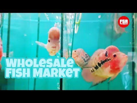 Kurla Aquarium Fish Market Flowerhorn At Wholesale Rate In Mumbai