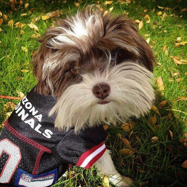 finest selection 43cee aa8c5 This pup Arizona jersey proves the whole family is a ...