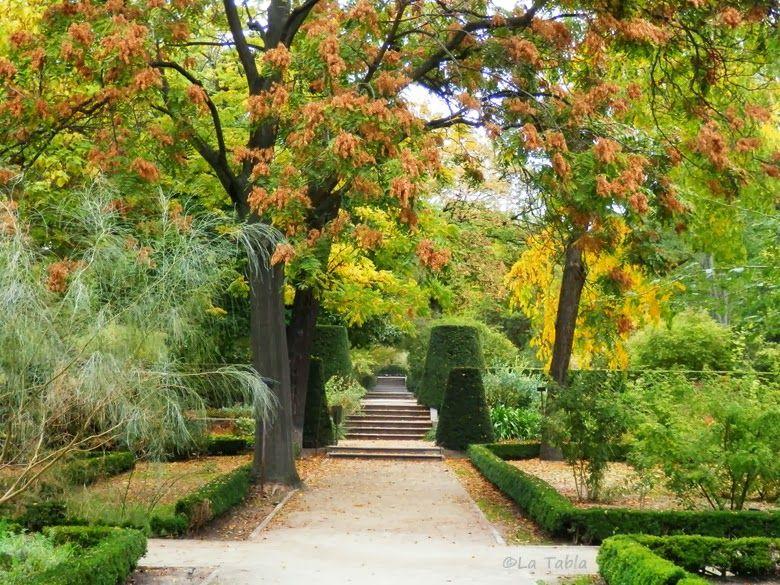 El blog de la tabla hojas y oto o real jard n bot nico for Informacion sobre el jardin botanico