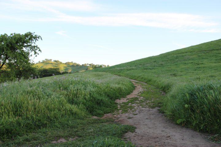 Free Stock Photo Of Dirt Path Through Tall Grass On Hill Tall Grass Grass Paths