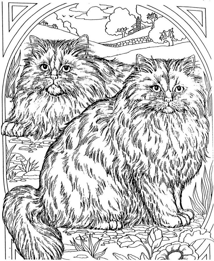 Adult Coloring Page Cat Realistic Animals Butterflies