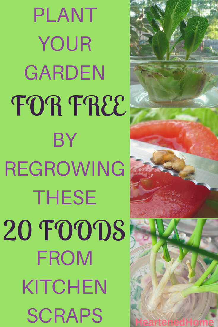 Plant Your Garden For Free By Regrowing These 20 Foods From