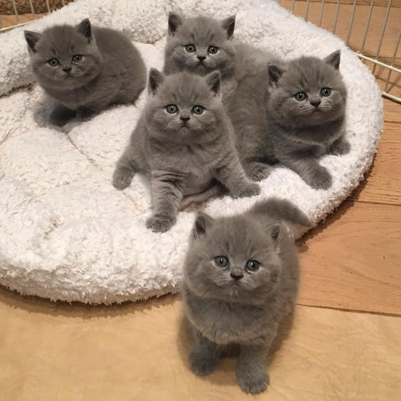 Love Cute Cats And Kittens Cute Cats Cats And Kittens