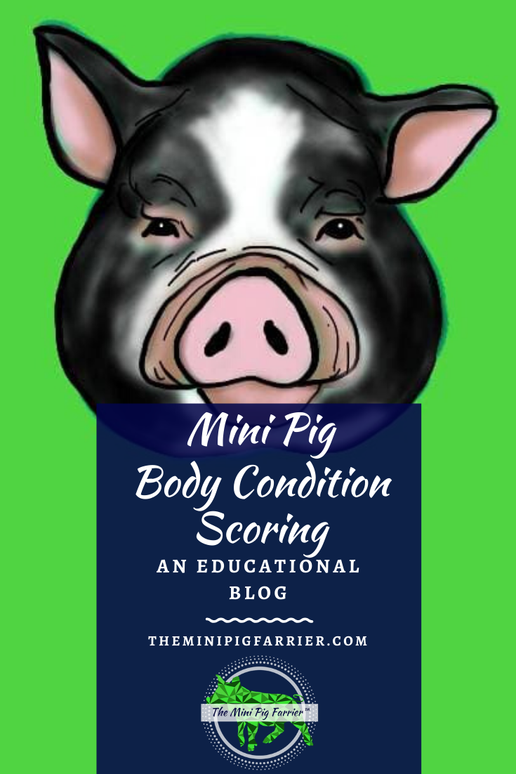 Mini Pig Body Condition Scoring Chart   Mini pig, Pig hooves, Pig