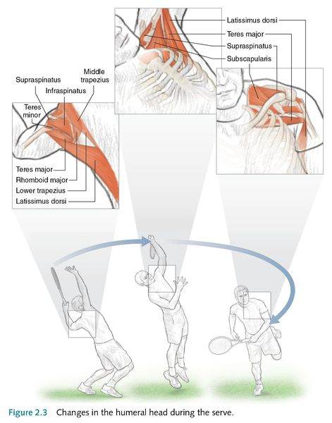 Tennis Strokes And Shoulder Movement
