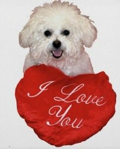 Confusing Food With Love Your Overweight Bichon Hillspet