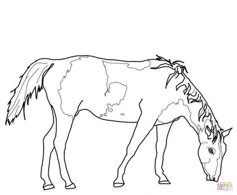 Free Printable Coloring Pages Within Paint Horse Grazing Coloring Pages Animal Coloring Pages Horse Coloring Pages American Paint Horse