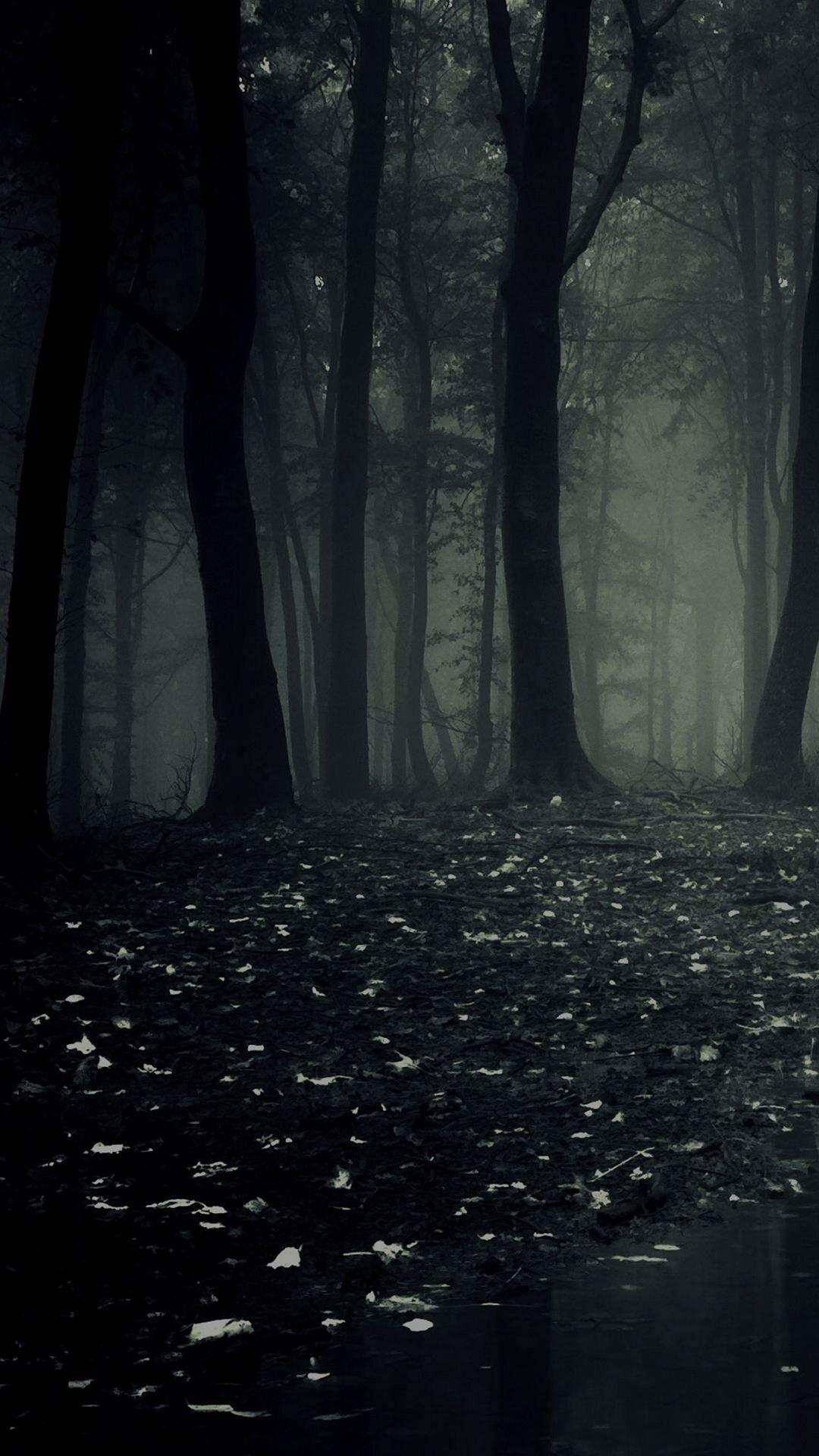 خلفيات طبيعة Nature عالية الوضوح Dark Forest غابات غابة غامق 35 Imagenes De Paisajes Animados Fotografia Creativa Fondos De Pantalla Black