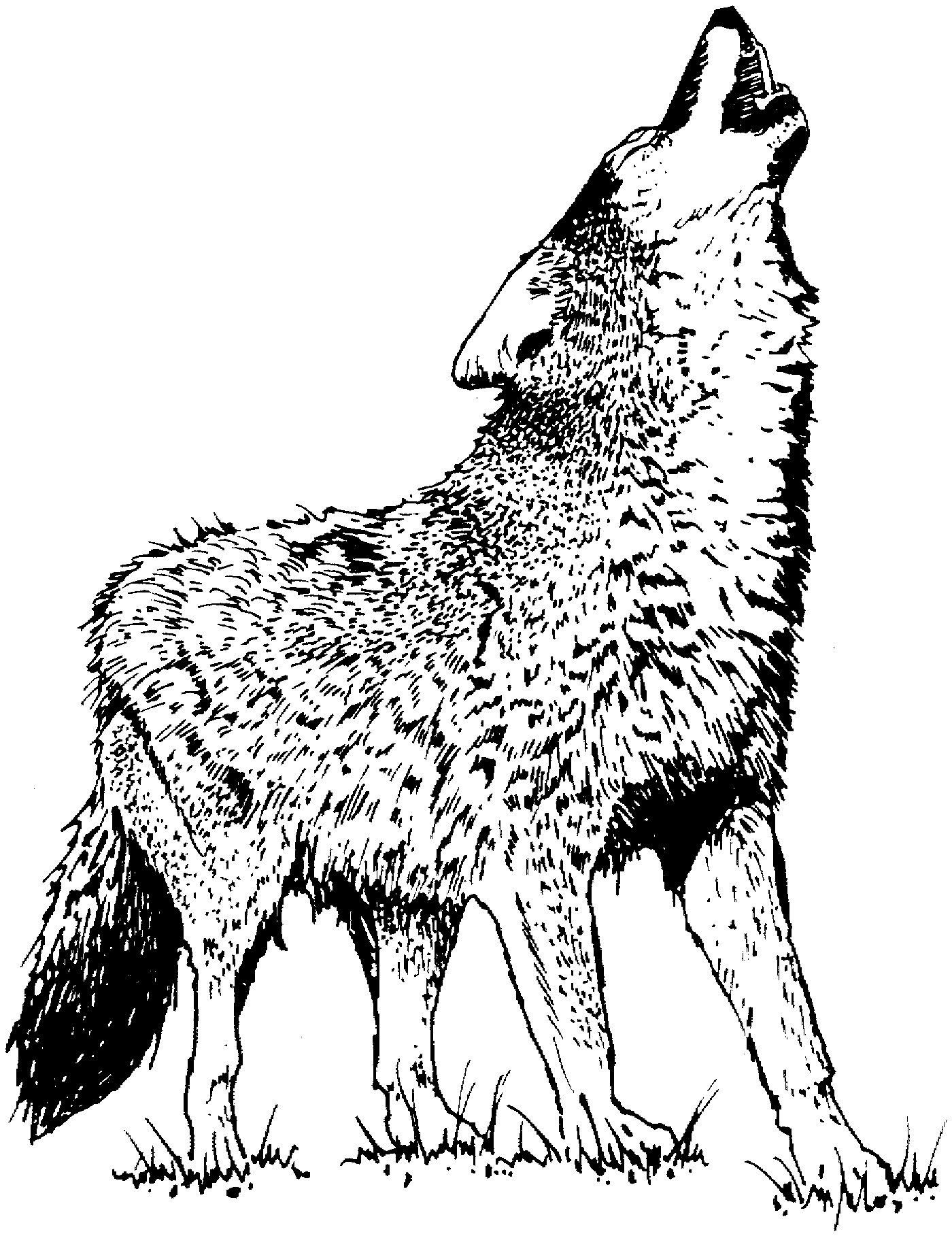 Wolf Coloring Pages Realistic Realistic Wolves Howling Drawing Horse Coloring Pages Deer Coloring Pages Wolf Colors