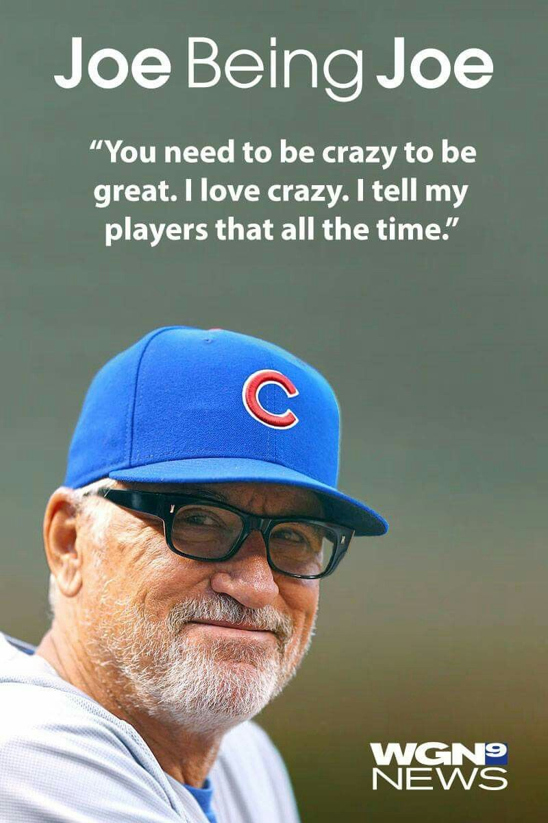 Crazy To Be Great Joe Maddon Quote My Cubbies Chicago Cubs