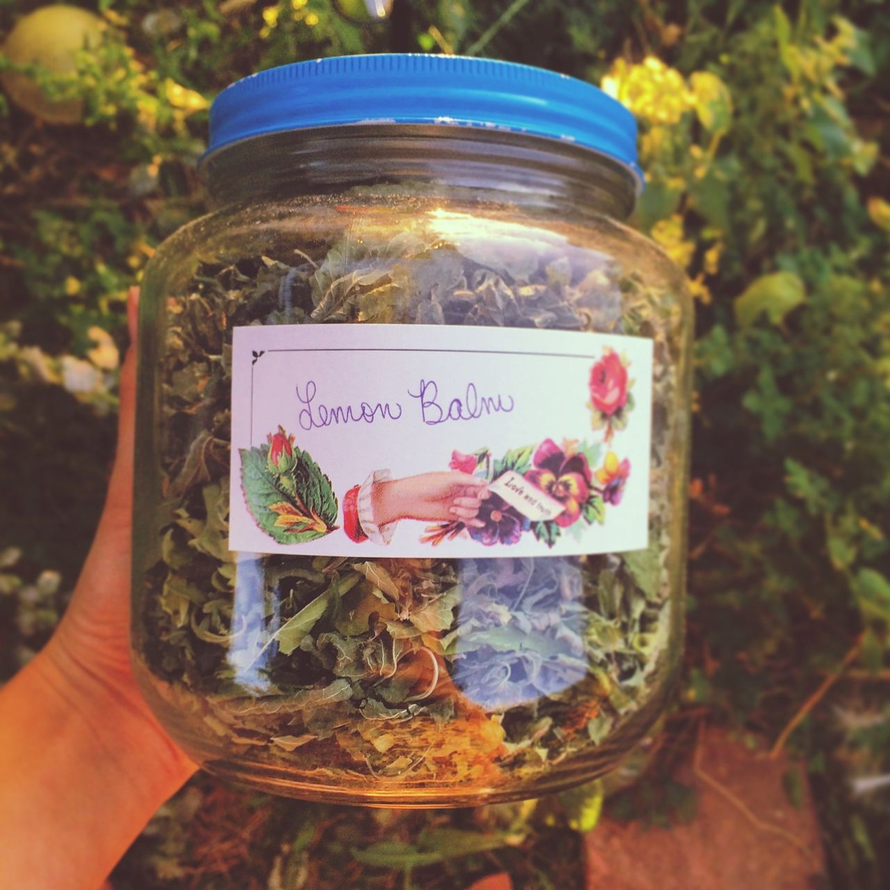 garbled and stored some lemon balm for the winter how to store