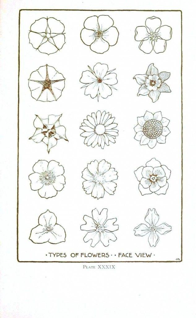 Botanical Flower Flower Line Drawings 2 Flower Line Drawings Flower Drawing Art Drawings