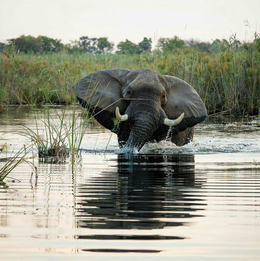 Beautiful Elephant taking a shower perhaps