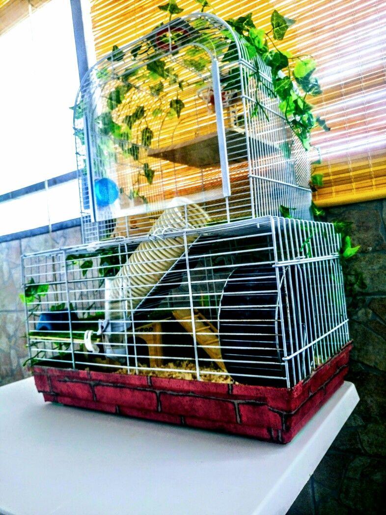 Hedgehog cage ideas hedgehog cage sugar glider fauna